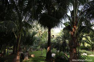 A co tutaj tak pachnie?? Ogród botaniczny królowej Sirikit