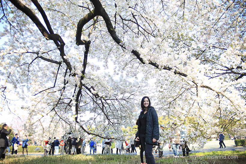 Japonia praktycznie sakura time! Przewodnik po kwitącej wiśni w Tokio