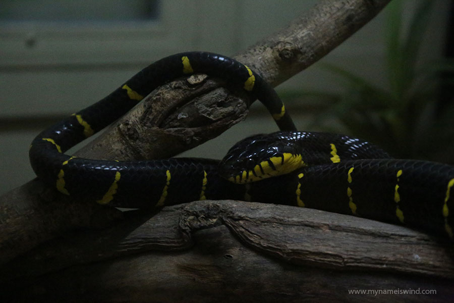 Farma węży - Bangkok